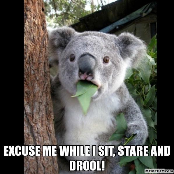 koala drool meme